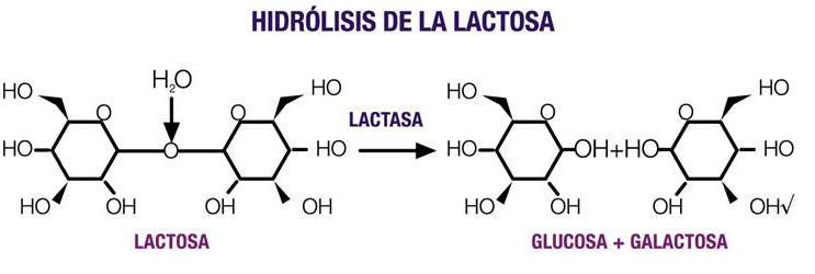 hidrolisis de la lactosa